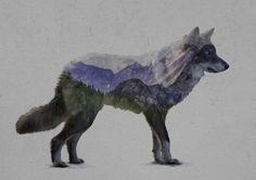 The Rocky Mountain Gray Wolf Art Print by Davies Babies