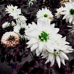 Fleurs métallique # 2