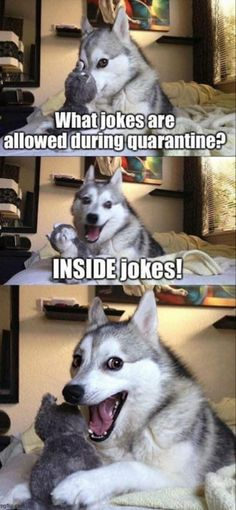 best jokes ever hilarious \ best jokes . best jokes ever . best jokes for kids . best jokes in hindi . best jokes ever hilarious . best jokes for friends Funny Dog Jokes, Puns Jokes, Dad Jokes, Stupid Funny Memes, Funny Relatable Memes, Haha Funny, Funny Humor, Memes Humor, Funny Quotes