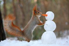 雪だるまにキスをしていると見えた方はロマンチスト♪ 本当は人参を食べたかっただけなのかも・・?