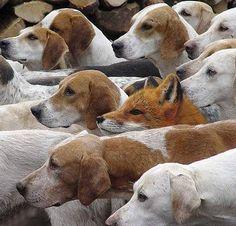 今から狐狩りに行くゾー。みんな狐の匂いは覚えたか?見つけたら、こっちへ追い込むんだぞ。わかったか!?【お話しようよ/goo】