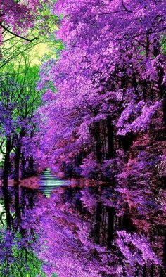 Beautiful purple majesty...