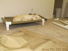 PVC Dog Cot Tutorial - TheDIYGirl.com
