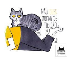 como-diria-gato9