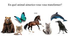 Quiz - En quel animal aimeriez-vous vous transformer? Transformers, Test Image, Questionnaire, Genre, Lion, Poster, Spirituality, Overhead Press, Gardens