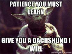Dachshund + Patience