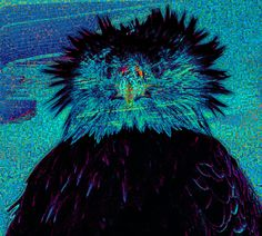 pigeon #glitch