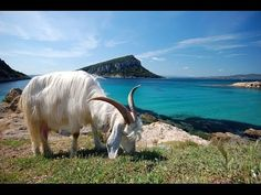 National Geographic Guardians Of Nature. Sardinia.