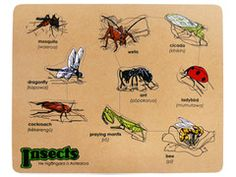 New Zealand Insects Puzzle - Te Reo Maori Puzzles - Belonging & Community Puzzles - Puzzles & Games - Catalogue Group Activities, Early Childhood, New Zealand, Puzzles, Kids Toys, Insects, Catalog, Community, Education
