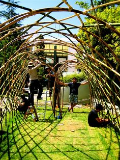 bamboo teepee trellis ideas - Yahoo Image Search Results