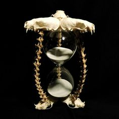 Real skulls and vertebrae hourglass. Just listed at www.forgottenboneyard.com