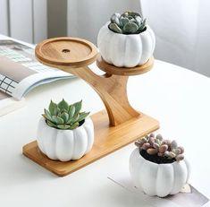Succulent Pots, Planting Succulents, Planting Flowers, Succulent Table Decor, Decoration Plante, Decoration Piece, Ceramic Flower Pots, Ceramic Owl, Bamboo Shelf