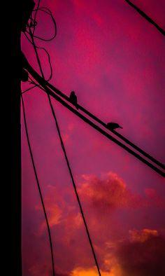 https://flic.kr/p/ANGW6E | Birds in pink