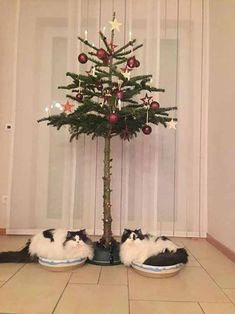 Take a look at some of the hilarious ways you can protect your tree this Christmas!