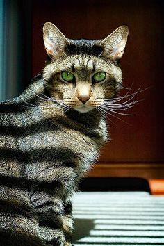 Mondo gato