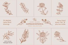 All you need to create a modern hand drawn floral logo! Including Australian native inspired plants (and some others that are very popular here) illustrated using pen, pencil and paper. Illustration Art Drawing, Plant Illustration, Botanical Illustration, Graphic Illustration, Watercolor Drawing, Illustration Fashion, Creative Illustration, Koala Illustration, Botanical Drawings