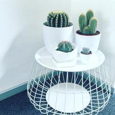 Cactus-voor wanneer er geen kleine kindjes meer in huis zijn