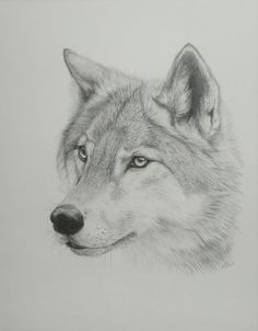 How to draw wolfs - P 1- Heads by Kimai  Part 2 & 3 and tutorial for poses below Pic. Description from pinterest.com. I searched for this on bing.com/images