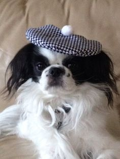 Navy Houndstooth Beret Dog Hat Small Tam by Doginafez on Etsy