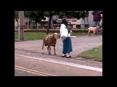 This Goat is a THUG - KevOnStage