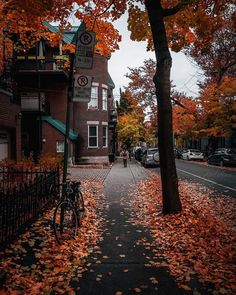 Can't you just hear the leaves crunching? Who else loves crunchy leaves. Green Design, Foto Gif, Autumn Cozy, Autumn Fall, Autumn Leaves, Autumn Witch, Autumn Scenes, Autumn Aesthetic, Fall Wallpaper