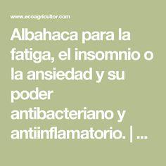 Albahaca para la fatiga, el insomnio o la ansiedad y su poder antibacteriano y antiinflamatorio. | ECOagricultor