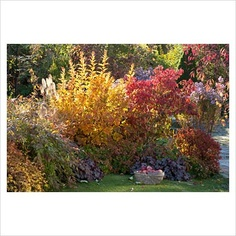 Colourful border: Physocarpus 'Dart's Gold', Euonymus alatus, Heuchera, Pennisetum, Aster and Spiraea 'Golden Princess'