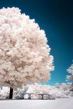 Twitter / Earth_Pics: Breathtaking Asheville, North ...  El #árbol es una maravilla de la naturaleza - #tree #arbre