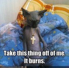 Image detail for -funny pictures of cats with captions