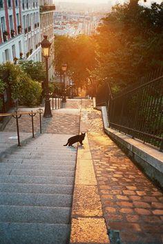 The black cat of Montmartre, Paris