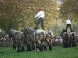 Dag van het Brabants Trekpaard te Vollezele verleden zondag. Een echt feest! Come and see next year!