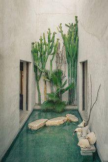 Philip Dixon's Moroccan garden in Venice, California