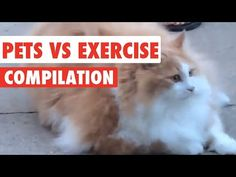 Pets Vs Exercise Video Compilation 2017 : Video Clips From The Coolest One