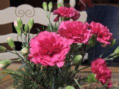 Sunnuntain ajatuksia Sunnuntai, Lady, Plants, Plant, Planets