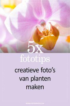 Fototips - creatieve foto's van planten maken - Fotografille