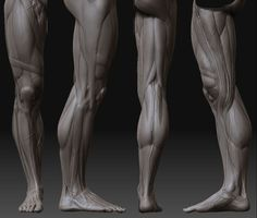 """Leg Musculature w """"Band of Richer"""" (the diagonal band just above the knee that…"""