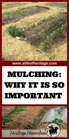 Mulching just may be the saving grace of the gardening year. Find out your mulching options, what it does for the soil and the best tech via @delciplouffe