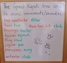 Rainforest activities (including The Great Kapok Tree activities including You Tube video and reading of book)