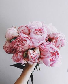 Good Pics Peonies aesthetic Style The peony is definitely insanely gorgeous in bloom from spg for you to summer—having abundant plant life al My Flower, Fresh Flowers, Pink Flowers, Beautiful Flowers, Bunch Of Flowers, Peony Flower, Cactus Flower, Exotic Flowers, Yellow Roses