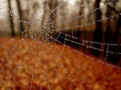 I love Halloween and autumn. Anyone wanna join me for a Halloween party just ask, okay? And don't be afraid to ask me anything, halloween/autumn related or not! Water Photography, Autumn Photography, Spider Art, Spider Webs, Spiderwick, Charlottes Web, Autumn Cozy, Autumn Fall, Winter