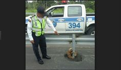 OSO PEREZOSO. Un oso perezoso estaba detenido en mitad de una autovía en la provincia de Los Ríos en Ecuador, como esperando a que alguien le prestara ayuda o atención. Fue rescatado por agentes de la...