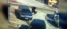 Een oudere man moest tijdens een 30 minuten durende aanval van een #Tibetaanse Mastiff gebruik maken van zijn #Kung-Fu technieken.
