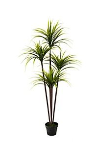 Shop online with MRP Home and find the perfect artificial flowers to freshen up your living spaces. Yucca Tree, Mr Price Home, Home Decor Online, Plant Decor, Artificial Flowers, Home Furniture, Sweet Home, Plants, Design