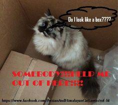 poor little kitty....