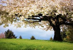 Primavera no campo.