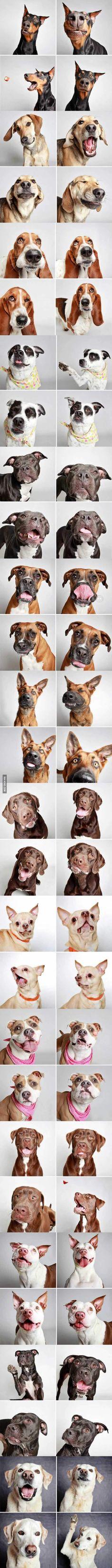 Humane Society of Utah sets up a dog photobooth to encourage adoptions