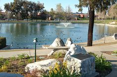 Temecula Duck Pond   Rancho California @ Ynez