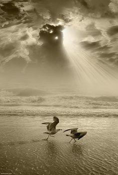 Seagulls Sunburst - Ben Heine