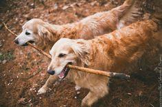 rouxby_dog_columbus_denver_14