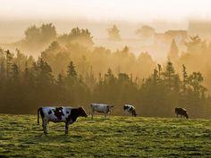 Morning Mist, Prince Edward Island
